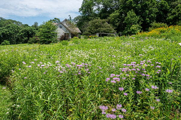 Mature Native Meadow Landscape in summer