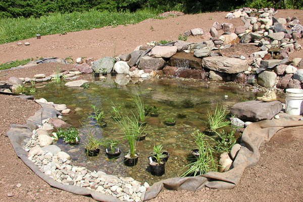 Pond being planted after construction