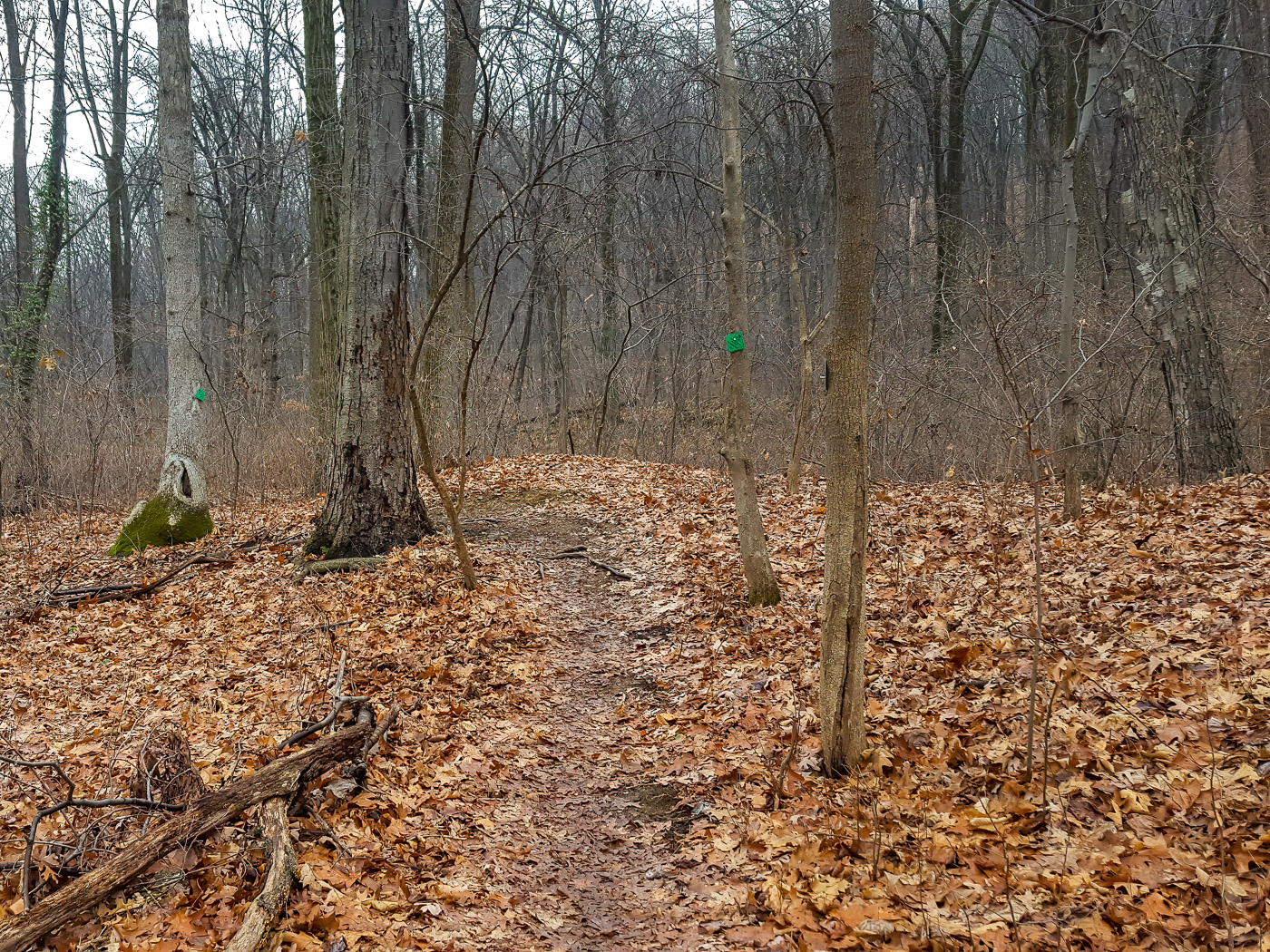 This woodland has a thick leaf understory protection for the coldest part of winter.