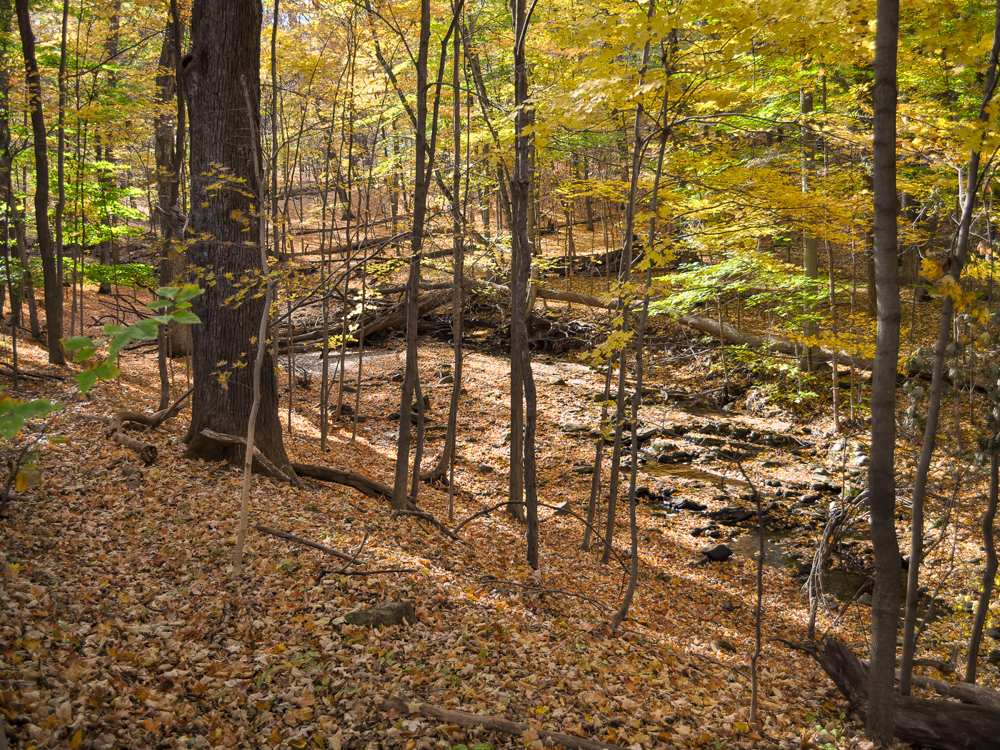 A healthy woodland ecosystem relies on the natural recycling of its leaves.