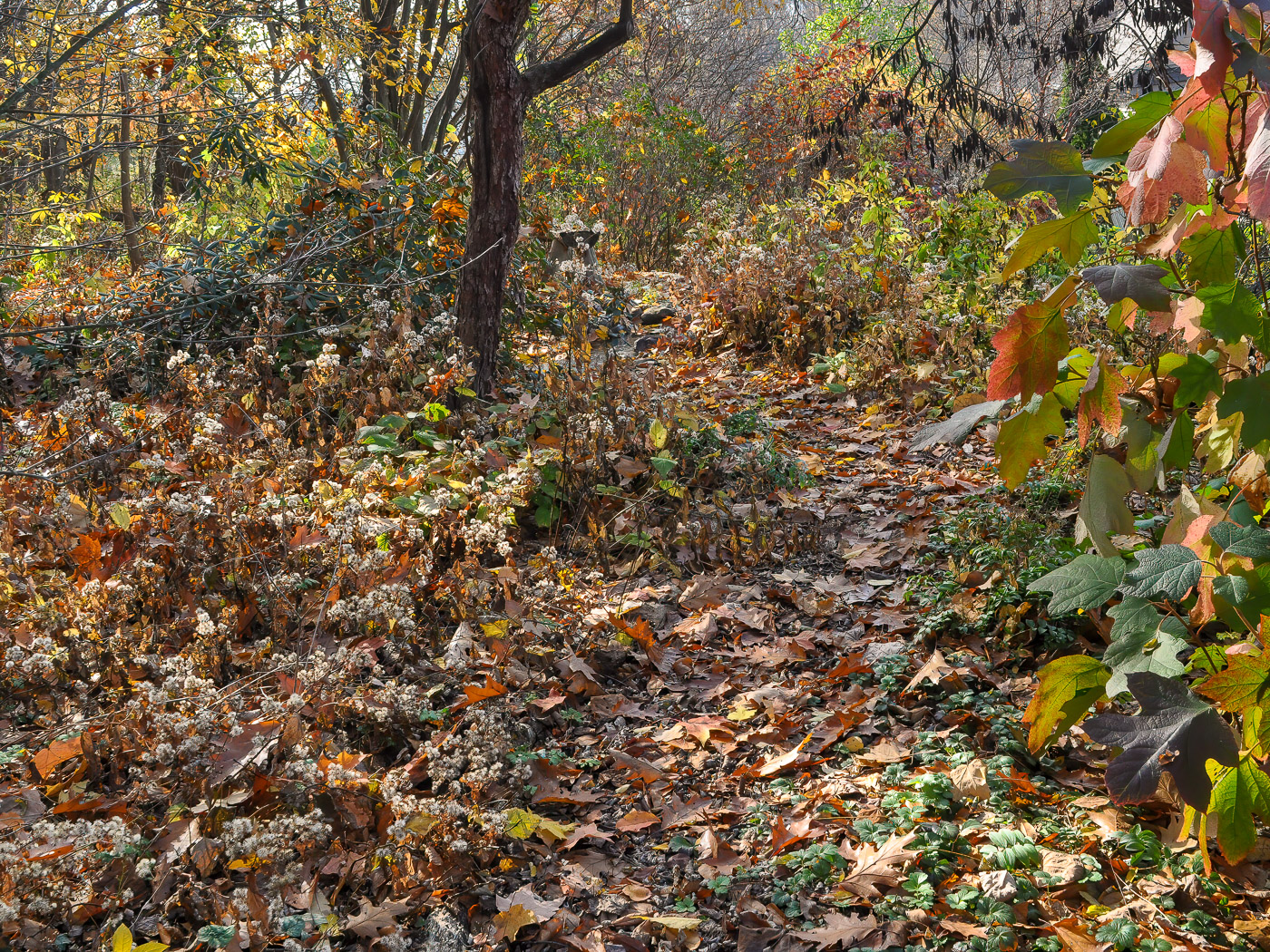 This backyard bed needs no clean-up. The fallen leaves and perennial seed heads are important for wildlife and plant communities.
